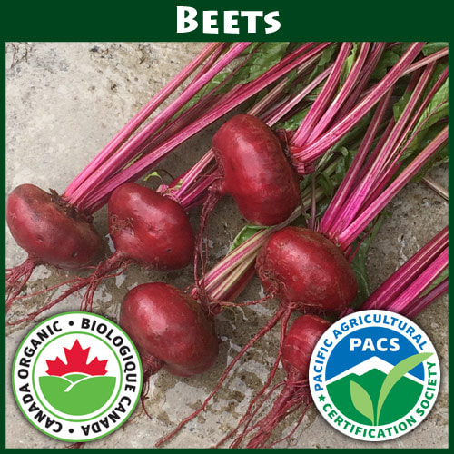 Beets Flat of Egypt