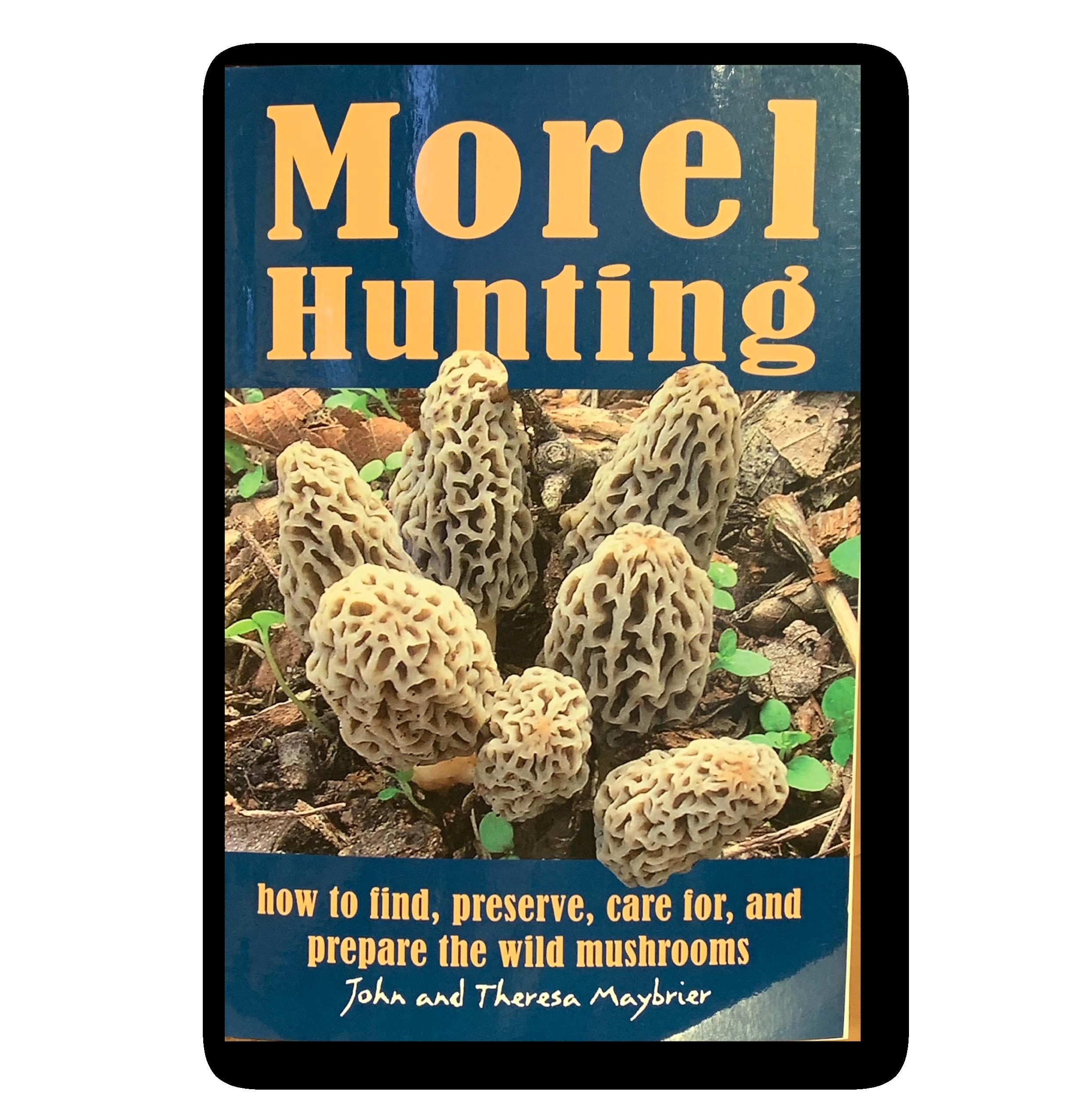 Morels in Michigan