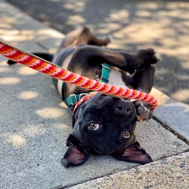 Puppy Jump Start Program