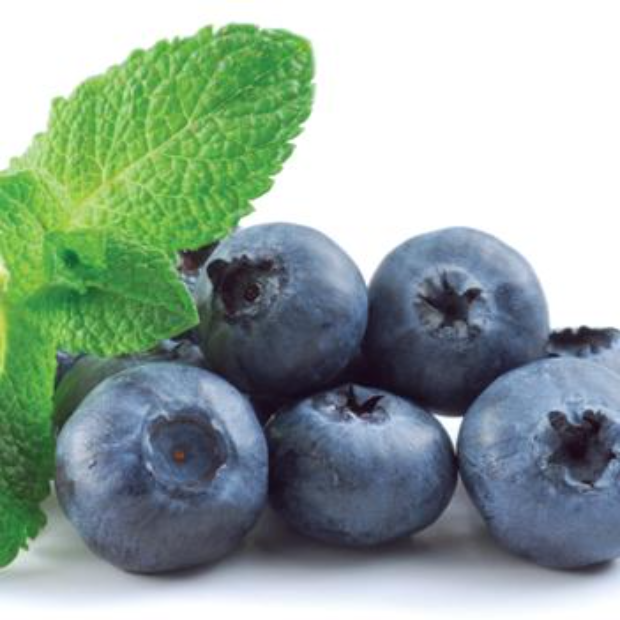 Michigan grown Blueberries in 10 pound cartons, about 14 pints